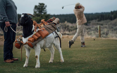 Goats As Caddies